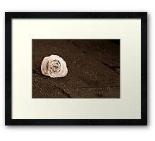 Still Graceful Framed Print