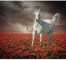 Tip Toe Through The Tulips Photographic Print