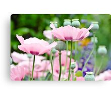 Rose Poppies blooming Canvas Print