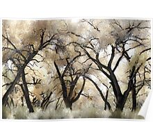 Cottonwood Trees in Autumn Poster