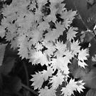 Cascade of Leaves by Chris Samuel