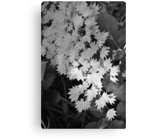 Cascade of Leaves Canvas Print