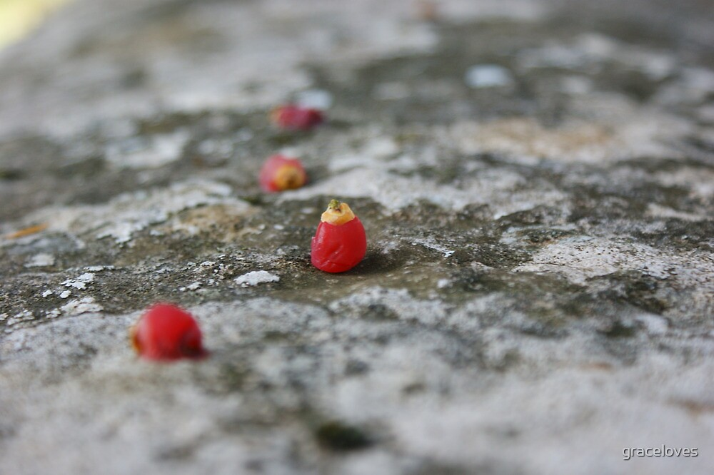 Red berries on a rock by graceloves
