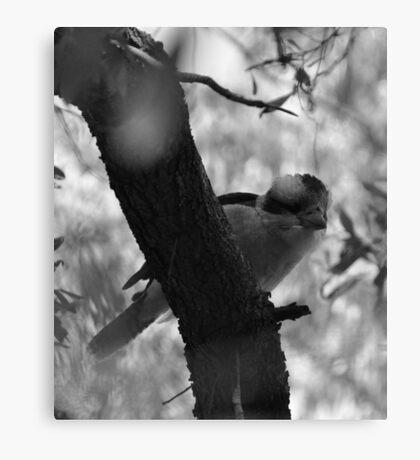 Kookaburra (B&W) Canvas Print