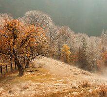 Autumn landscape by julien  oncete