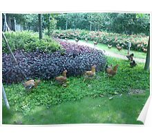A Cute Little Chicken Parade Poster