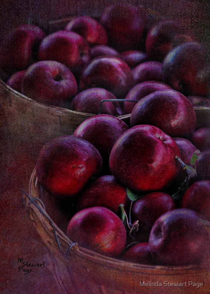 """An Apple A Day"" by Melinda Stewart Page"