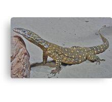 A Lizard in captivity, Sydney. Canvas Print