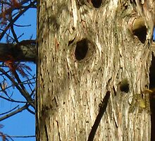 Old Woodpecker Homes by dge357