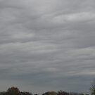 November Skies 8 by dge357