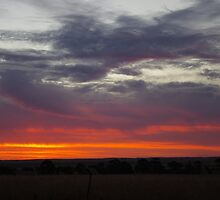 Naracoorte sunset 11/11/11 by davidjc
