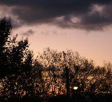 November Morning 4 by dge357