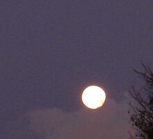November Moon  by dge357