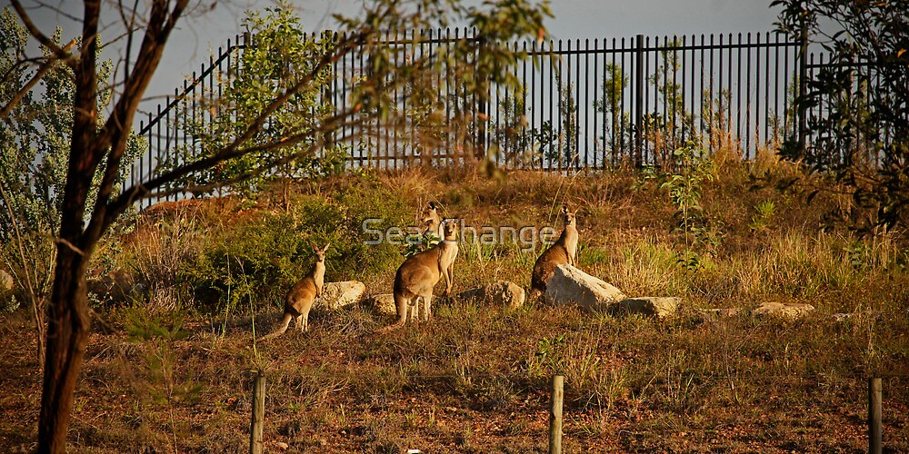 Wildlife in Suburbia by Sea-Change