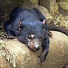 Tasmanian Devil #1 by Karen Stackpole