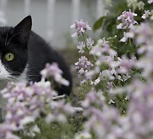 Kitty, I see you! by Jocelyn  Parry-Jones