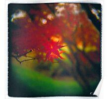 Red Leaf Sunset Poster