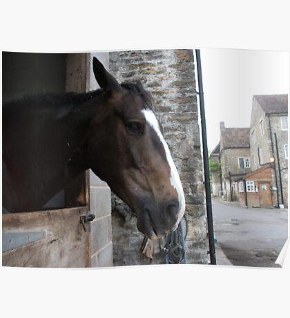 horsey hi Poster