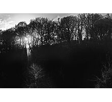 trees in light and silhouette, Graiguenamanagh, County Kilkenny, Ireland Photographic Print