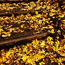 Autumn Yellow by timmburgess