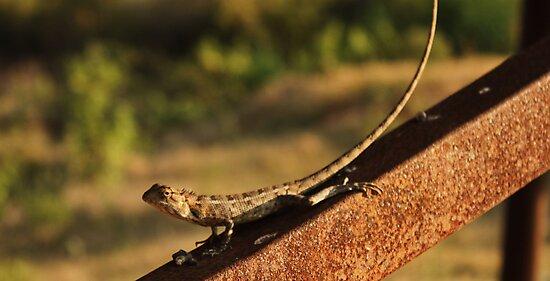 iguana by artsyashi