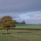 Autumn Oak 2 by ruleamon