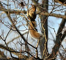 Chilly Squirrel by P.M. Franzen