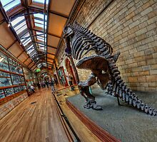 London - Natural History Museum II by Pawel Tomaszewicz