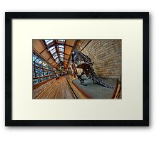 London - Natural History Museum II Framed Print