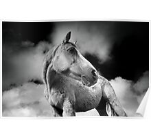 Horse (20-2) After the Storm Poster