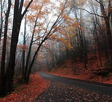 foggy fall drive by kathy s gillentine