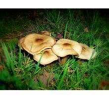 Pancake Mushrooms Photographic Print
