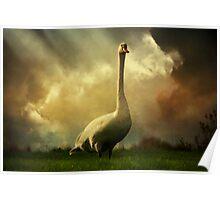 Swan Scene Poster