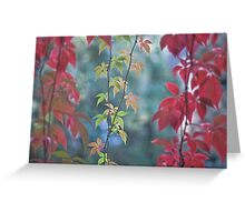 Living curtain Greeting Card