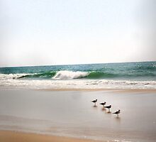 Atlantic Seagulls by mkART