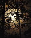 Moonrise in the Forest by barnsis
