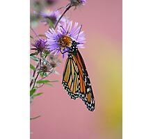 Pastel Fall Photographic Print