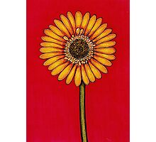 Single Yellow Gerbera Photographic Print