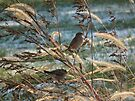 Chipping Sparrows in the Weeds by Deb Fedeler
