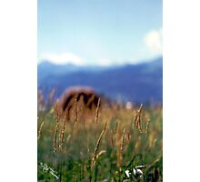 Hay Stack Photographic Print