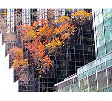 Autumn Tower, New York City  Photographic Print