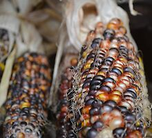 Indian Corn by JustineGersich