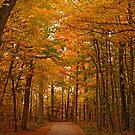 A Walk in the Woods by Dawne Olson