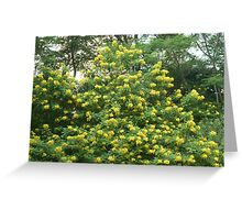 gradiose petite sunshine blossoms Greeting Card
