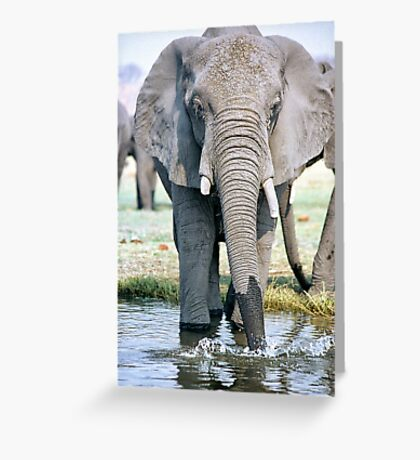 Thirst On The Chobe River Greeting Card