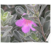 Approaching Flower Through Bush Forest Poster