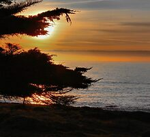 Sea Ranch Sunset by Barbara  Brown