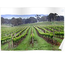 ~ Spring Vines ~ Poster