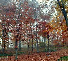 My Backyard - Fall by Deborah Crew-Johnson