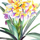 "Clivia ""Golden Dragon"" by Pat Yager"